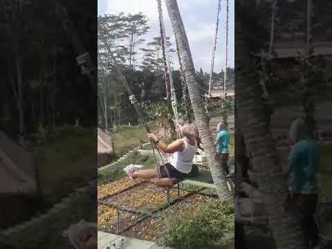 Swing in ubud