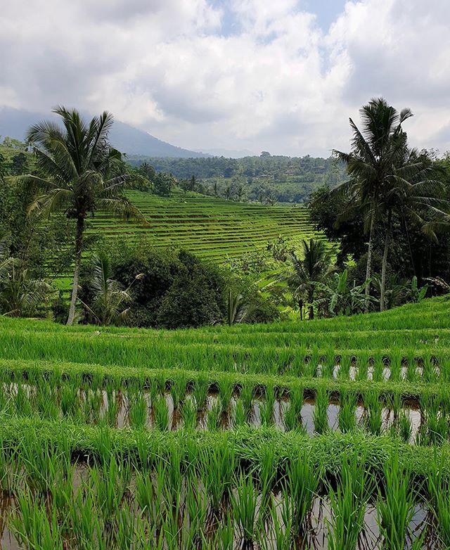 Impossible de ne pas tomber amoureux des couleurs de Bali.